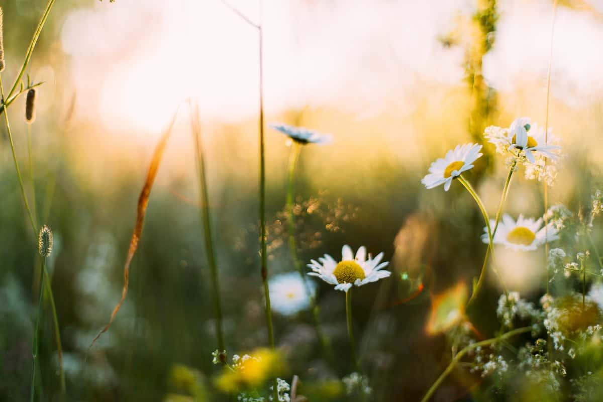 Gydytoja perspėja sergančius atopiniu dermatitu: pavasarį reikėtų labiau pasisaugoti