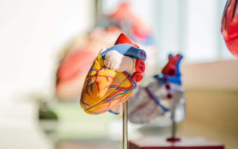 Šioje nuotraukoje - širdies muliažas.