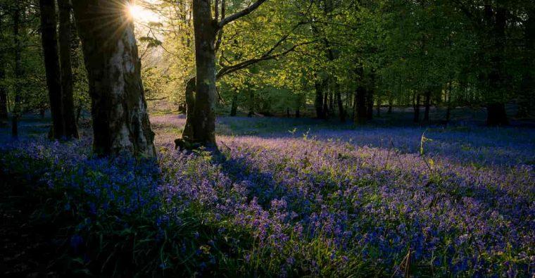Šioje nuotraukoje - miškas vakare.