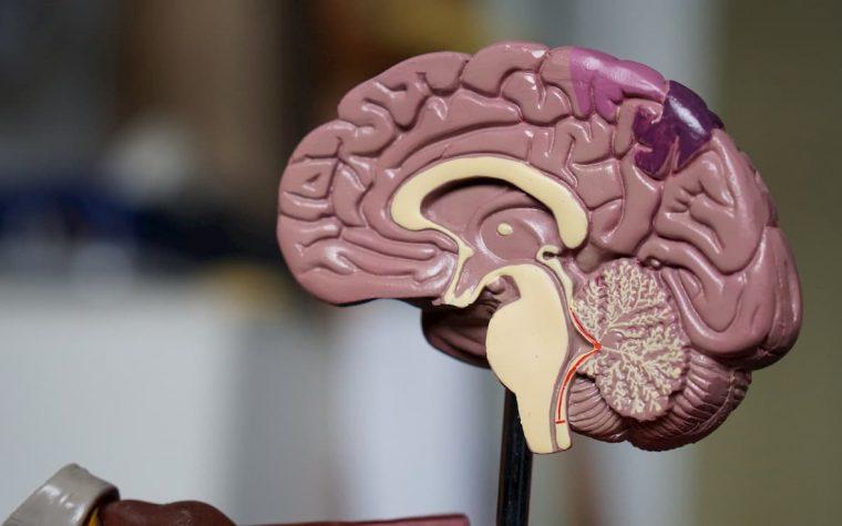 Diagnozuoti smegenų metastazę ankstyvoje stadijoje galimai taps lengviau